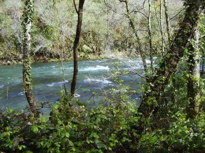 20110502230623-bosque.jpg