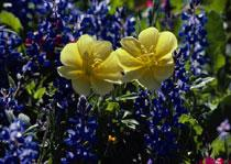 primaveras.JPG