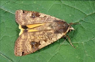 20060602195452-mariposa.jpg
