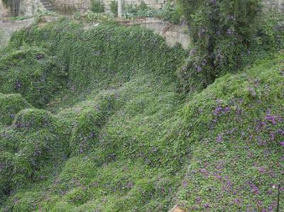 20110727210029-tapiz-flores.jpg